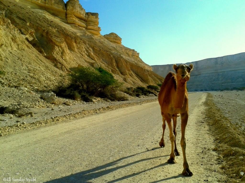 Oman_12
