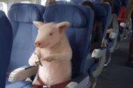 cellulare acceso in aereo