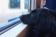 viaggio in treno da Ventimiglia a Torino